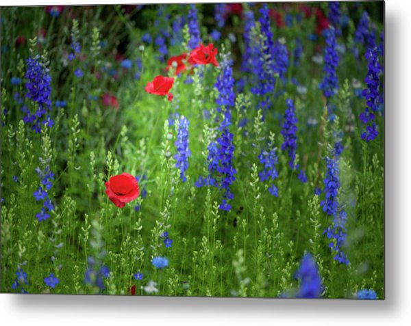 Metal Print featuring the photograph Poppies And Wildflowers by Mark Duehmig