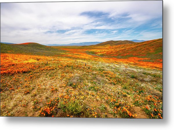 Poppies As Far As The Eye Can See Metal Print