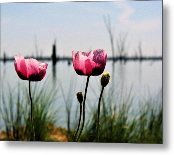 Poppies On Lake Mulwala 2 Metal Print