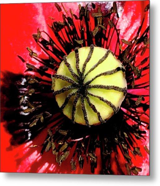 Red Poppy_7822_15 Metal Print