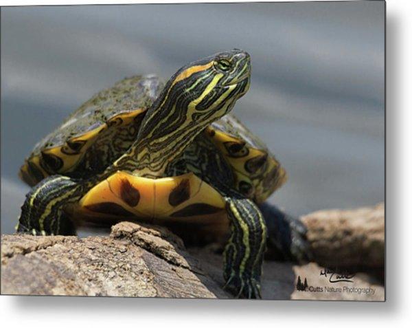 Portrait Of A Turtle Metal Print
