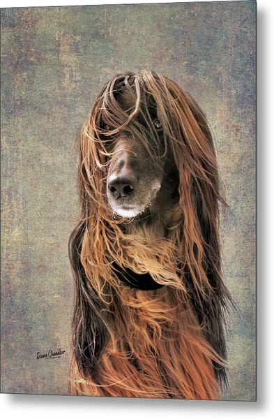 Portrait Of An Afghan Hound Metal Print