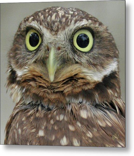Portrait Of Burrowing Owl Metal Print