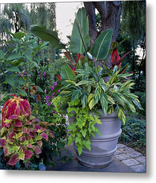 Potted Plants Including Bird Of Metal Print by Richard Felber