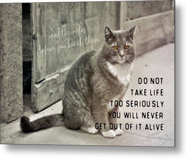 Pretty Kitty Quote Metal Print by JAMART Photography
