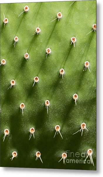 Prickly Pear Cactus Close Up Metal Print by Sumikophoto