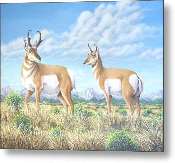 Pronghorn By The Tetons Metal Print