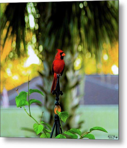 Proud Male Cardinal Metal Print