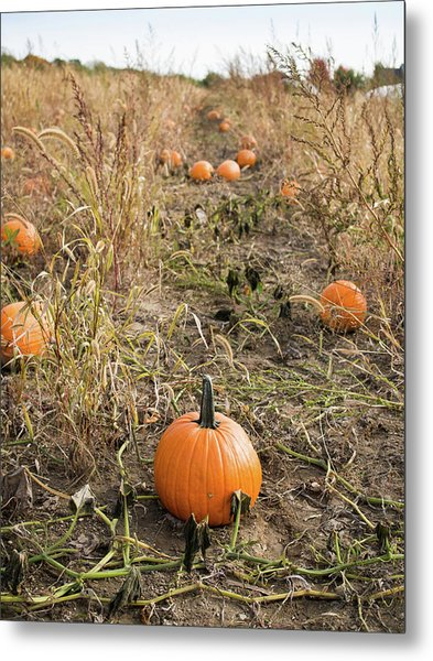Metal Print featuring the photograph Pumpkin Farm by Whitney Leigh Carlson