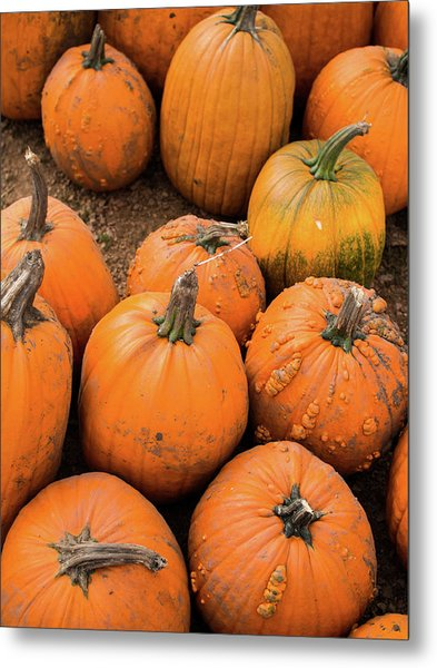 Pumpkins Of Different Shapes Metal Print