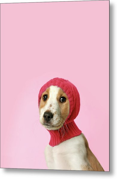 Puppy With Hat Metal Print