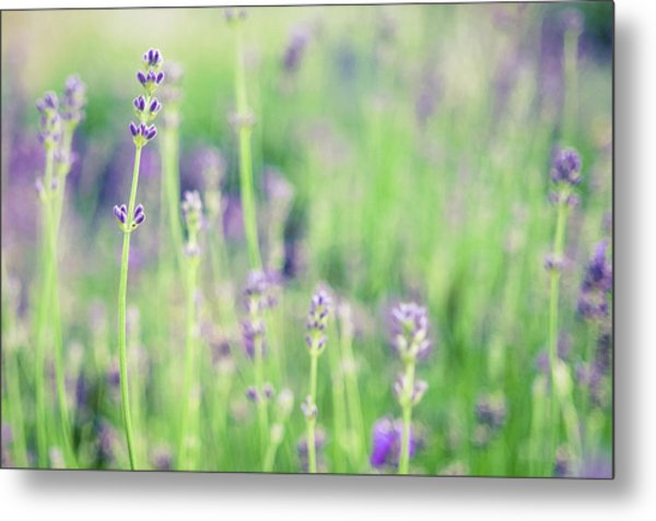 Metal Print featuring the photograph Purple Flowers by Nicole Young