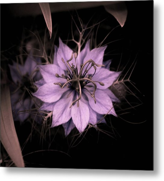 Purple Peculiarity Metal Print