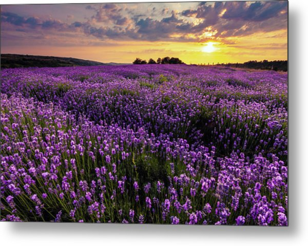 Purple Sea Metal Print