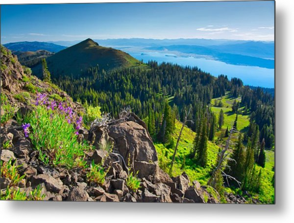 Purple Vista Metal Print