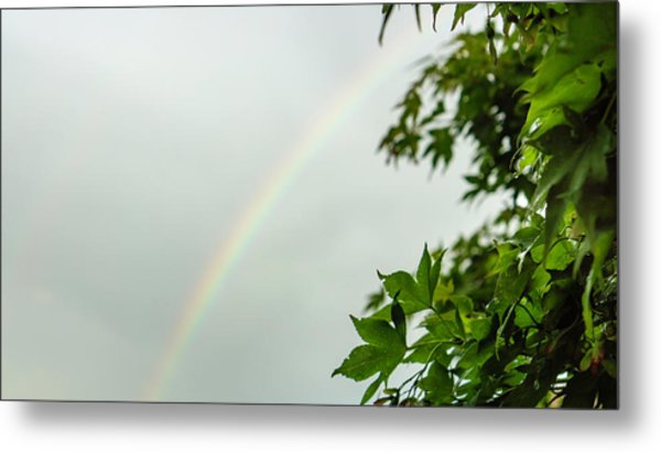 Rainbow With Leaves In Foreground Metal Print