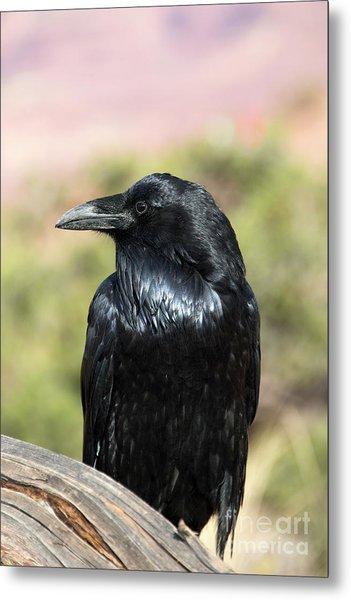 Raven Profile Metal Print