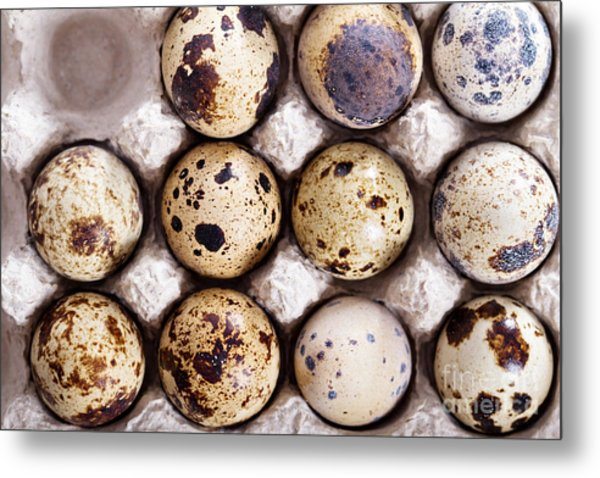 Raw Quail Eggs In Egg Holder From Above Metal Print