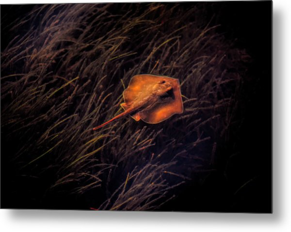 Ray In The Grass Flats Metal Print