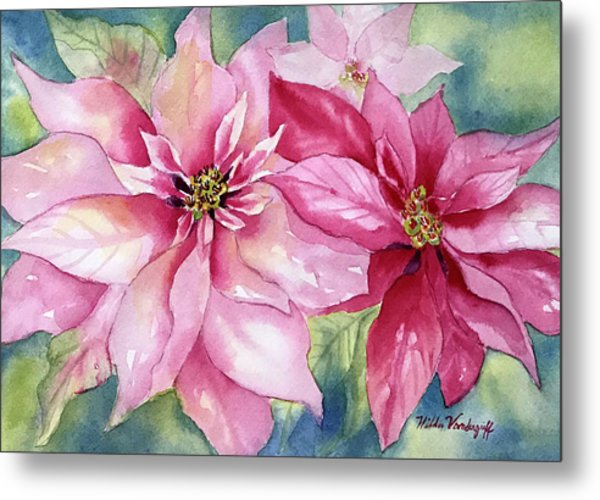 Red And Pink Poinsettias Metal Print