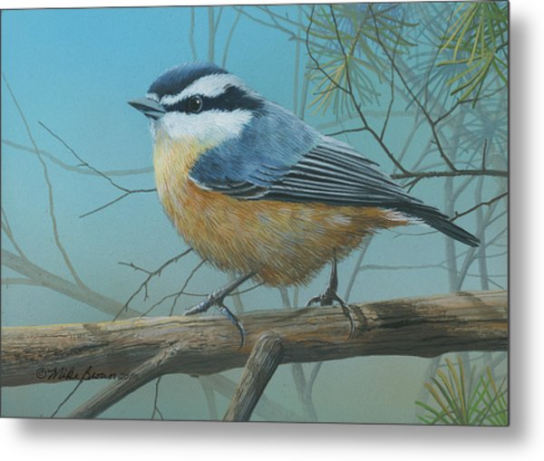 Red Brested Nuthatch Metal Print