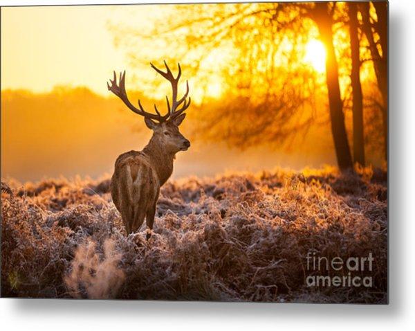Red Deer In Morning Sun Metal Print