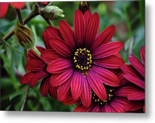 Red Flower - 19-5611 Metal Print