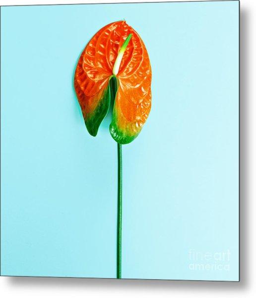 Red Flower Calla. Minimalism Style Metal Print