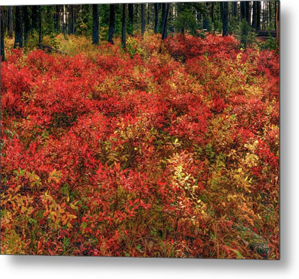 Red Forest Light Metal Print by Leland D Howard