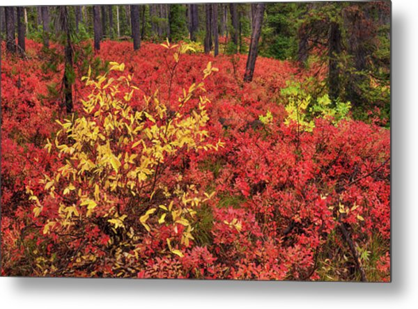 Red Forest Panoramic Metal Print by Leland D Howard