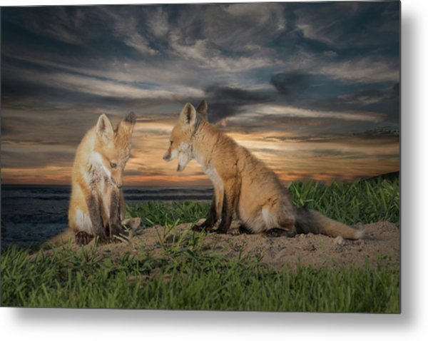 Red Fox Kits - Past Curfew Metal Print