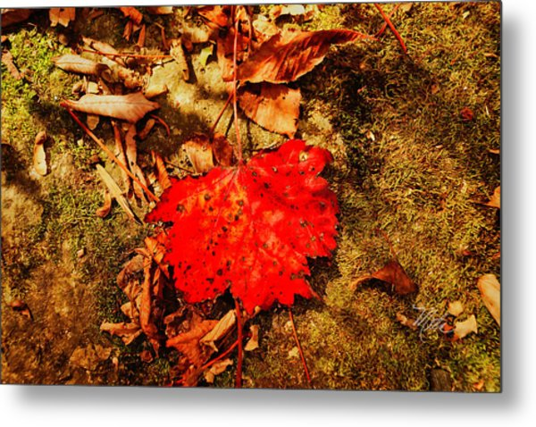 Red Leaf On Mossy Rock Metal Print