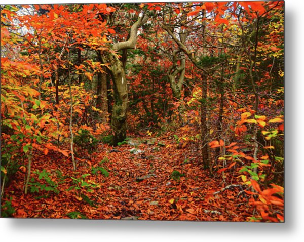 Metal Print featuring the photograph Red Oaks And At Blaze Horizontal by Raymond Salani III
