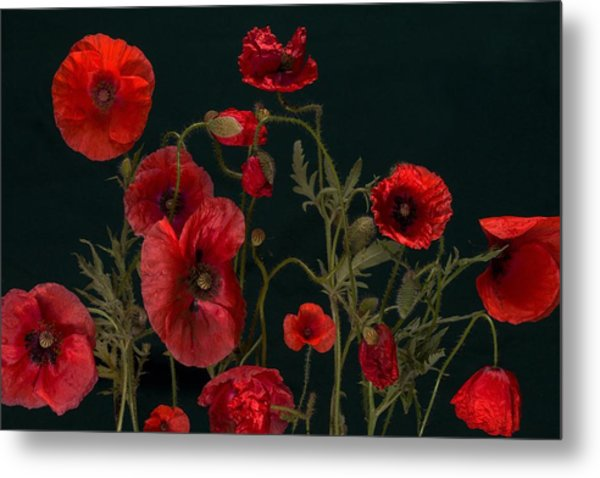 Red Poppies On Black Metal Print