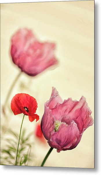 Red Shirley Poppy And Pink Peony Poppy Metal Print