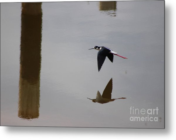 Reflection Of The Salton Sea Black Neck Stilt Flying Metal Print