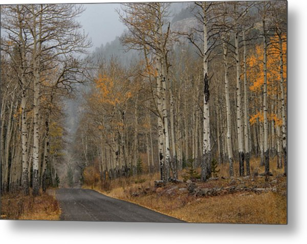 Metal Print featuring the photograph Remnants Of Fall by Darlene Bushue