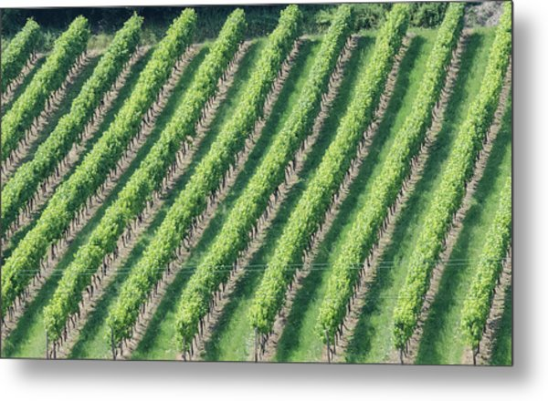 Riesling On The Rhine Metal Print