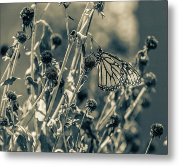 Resting Butterfly Bw Metal Print