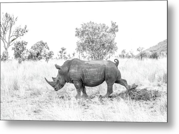Rhino Business Metal Print