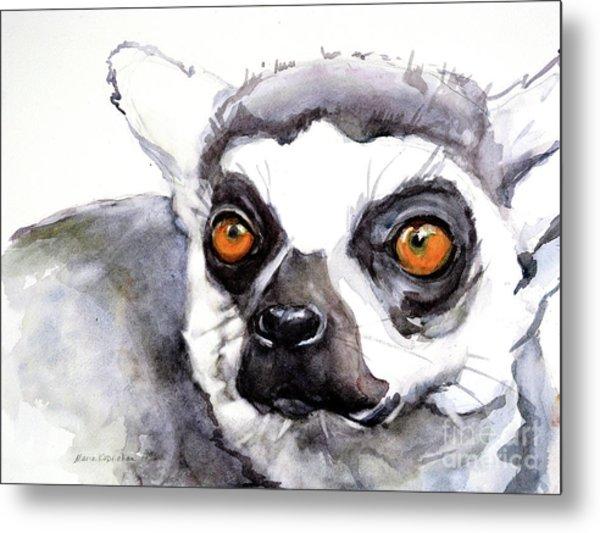 Ring-tailed Lemur Metal Print