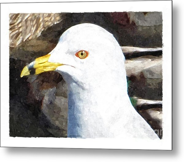 Ringbilled Gull Portrait Metal Print