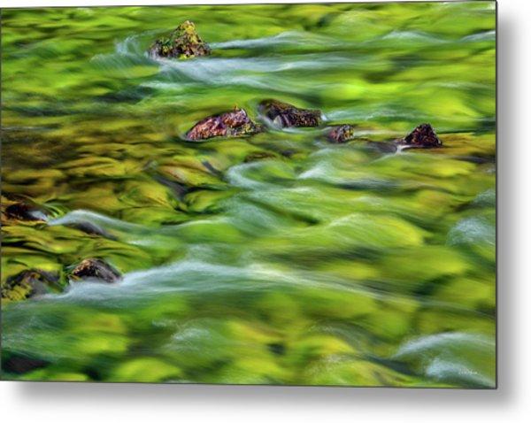 River Moss Metal Print by Leland D Howard