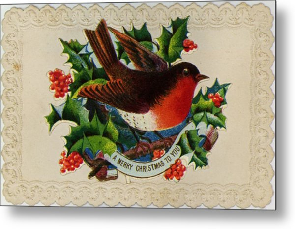 Robin Redbreast Metal Print by Hulton Archive