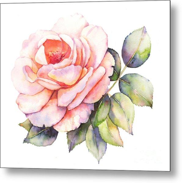 Rose Flower Watercolor Illustration Metal Print