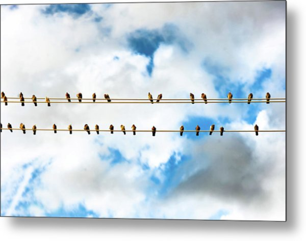 Row Of Birds On Electric Wire Metal Print