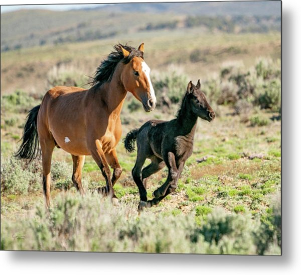 Running Wild Mustangs - Mom And Baby Metal Print