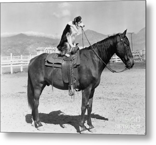 Saddle Up Metal Print by Everett Collection