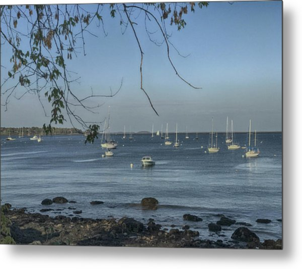 Sailboats In Rockland Harbor Metal Print