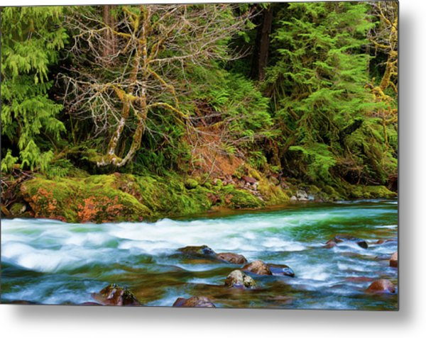 Metal Print featuring the photograph Salmon River Mt. Hood National Forest by Dee Browning